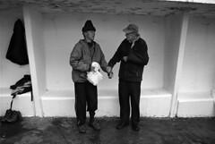 FF-012 (lumpy!) Tags: fortyfoot blackandwhite monochrome film leica trix water sea people street streetphotography dublin ireland swim