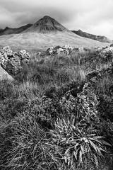 Cuillin mono (amcgdesigns) Tags: andrewmcgavin skye isleofskye cuillin glenbrittle ferns rocks mono monochrome blackandwhite black white shadesofgrey silverefex september september2016 eos100d canon light moody