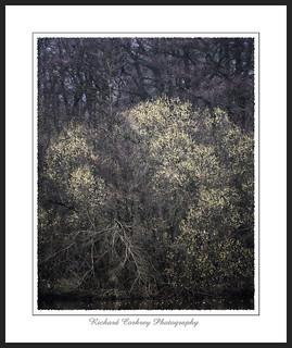 Woodland Flourish