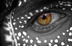 Sometimes the eyes can say more than the mouth. (aman.gujar) Tags: adivasi holi tribal tribalholi adivasieye eye