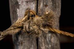 20170326-DSC_7383.jpg (NedraI) Tags: farmersmuseum spring farm knot sugaringoff rope cooperstown