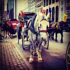 59th Street NYC (Christian Montone) Tags: newyork newyorkcity nyc centralpark montone christianmontone manhattan horses horse hansom carriage