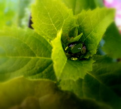 Green. (lory6093) Tags: foglie verde rugiada goccia
