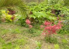 Dans la Vallée du Guillec à Plougoulm (Emma2922) Tags: fleur flowers nature plante jardin garden