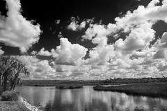Aripeka (Beth Reynolds) Tags: monochrome aripeka florida coastal water marsh tidal landscape clouds black white grass river