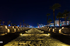 Avenue of the Sphinxes (Hossam Ghaith) Tags: sky city 500px nightscape landscape trees travel architecture canon photoshop lightroom long exposure light night egypt luxor blue temple building historic architectural columns eos 6d landscapephotography sphinxes hieroglyphs avenue this is hossam ghaith ef 1740mm f4l usm