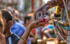 Prasad (Padmanabhan Rangarajan) Tags: kapaleeswarantemple 63 arubathimoovar mylapore festival carfestival chariot