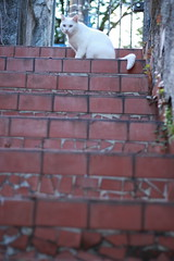 (camilakater) Tags: stair cat