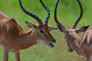 Have you heard about Daryl and Jen's 2018 Kenya Photo Safari?