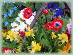 Easter Floral Basket (swetlanahasenjäger) Tags: coth5 saariysqualitypictures frühlingsblumen osternkorb anemonen osterglöcken primeln vergismichnicht osterblumen flora frowers easter esterfloralbasket ngc