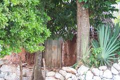 Vivienda ecológica (Brujo+) Tags: muna yucatán choza palapa