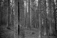 Skog (bildpunkt) Tags: leicamp summaron3528 agfaapx400 250 xtol1112min vuescan photoshop