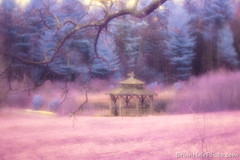 Nightmare seeping into a dream (Brian M Hale) Tags: tower hill botanic botanical garden boylston ma mass massachusetts outside outdoors nature lifepixel modified converted camera full spectrum orange 550 550nm filter ir infrared infra red canon t4i brian hale brianhalephoto gazebo pond trees branches purple pink lensbaby velvet velvet56 56mm