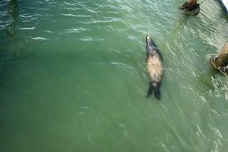 Native Swimmer