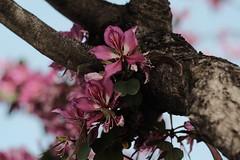 Al cobijo del tronco (ameliapardo) Tags: flores arboles airelibre colorrosa troncos naturaleza andalucía sevilla españa fujixt1