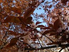 2017-03-28-7776 (vale 83) Tags: blossom nokia n8 friends macrodreams beautifulexpression coloursplosion colourartaward autofocus