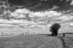 Paysage du Nord-Pas-de-calais (Nancy Boy - Photographe amateur) Tags: arbres trees paysage nuages clouds ciel sky tokina1224