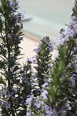 IMG_0579 (Gilles Couteau) Tags: provence vaucluse ventoux montventoux