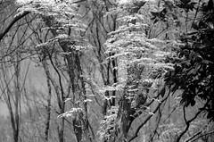 Afternoon of the forest (masamiy21) Tags: exakta varexvx fuji acros100 biometar 8028 carl zeiss jena osaka japan