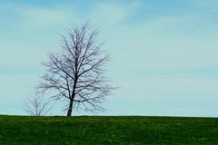 A tree over the horizon in Ottawa, Ontario (Ullysses) Tags: ottawa ontario canada spring printemps arbre tree horizon lakeviewpark andrewhaydonpark marina