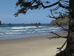 au revoir tilly girl (carolyn_in_oregon) Tags: crescentbeach cannonbeach pacificocean ecolastatepark coast