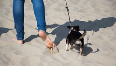 37 et 3 (Loanne Lo ou Lolo) Tags: pieds pattes sable chien