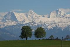 Berner Dreigestirn Eiger ( BE - 3`970 ) - Mönch ( BE-VS - 4`107m ) - Jungfrau ( BE-VS - 4`158m ) mit Jungfraujoch dazwischen ( Berg montagne montagna mountain ) in den Berner Alpen - Alps im Berner Oberland im Kanton Bern und Wallis - Valais der Schweiz (chrchr_75) Tags: hurni christoph chrchr chrchr75 chrigu chriguhurni april 2017 hurni170421 kantonbern schweiz suisse switzerland svizzera suissa swiss albumdreigestirneigermönchjungfrau dreigestirn eiger mönch jungfrau alpen alps berg mountain montagne albumjungfrau viertausender montagna berner oberland bergeiger albumeiger