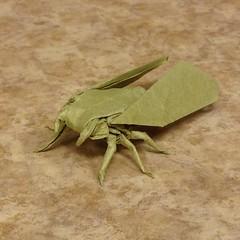 Classical Cicada