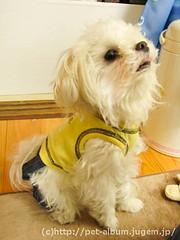 ペット(犬の福袋)のネタバレ写真10