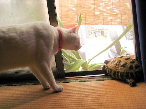 カメ&ミア(猫)の写真2
