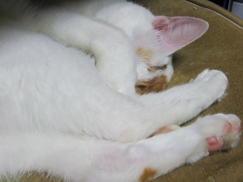 ミア(猫)の写真16