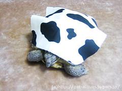 ペット服(牛コスプレ)の写真1