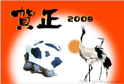 ペット・牛コスプレ2009年年賀状4