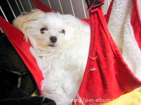 ミル(犬)−ハンモック写真2