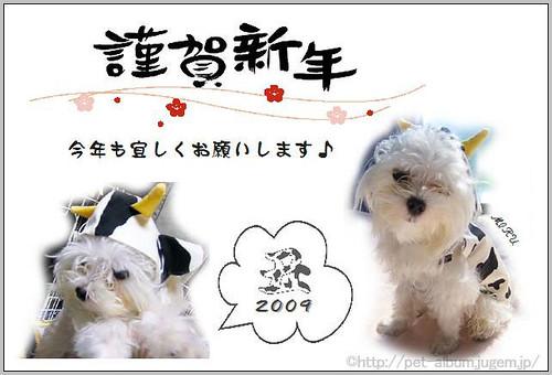 ペット・牛コスプレ2009年年賀状2