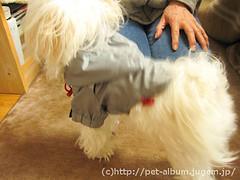 ペット(犬の福袋)のネタバレ写真7