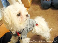 ペット(犬の福袋)のネタバレ写真6