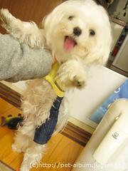 ペット(犬の福袋)のネタバレ写真12