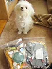 ペット(犬の福袋)のネタバレ写真1