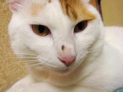 ミア(猫)の写真3