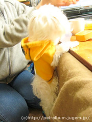 ペット(犬の福袋)のネタバレ写真14