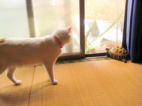 カメ&ミア(猫)の写真1