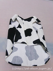 ペット服(牛コスプレ)の写真26