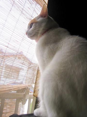 ミア(猫)の写真8