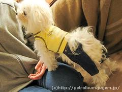 ペット(犬の福袋)のネタバレ写真8