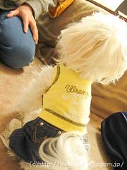 ペット(犬の福袋)のネタバレ写真9