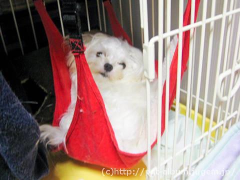 ミル(犬)−ハンモック写真1
