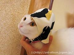 ペット服(牛コスプレ)の写真42