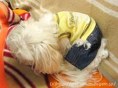 ペット(犬の福袋)のネタバレ写真11