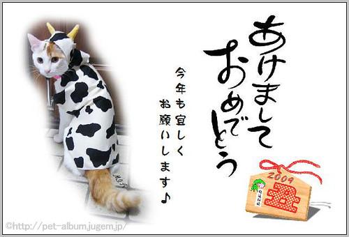 ペット・牛コスプレ2009年年賀状1